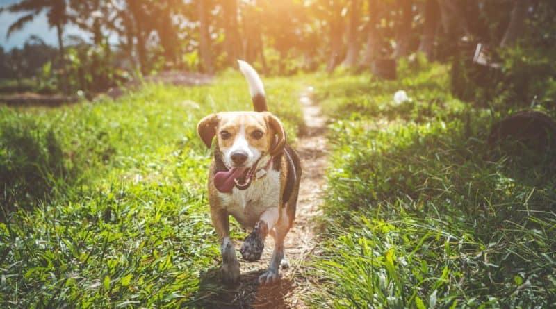 Cane felice che corre nella natura
